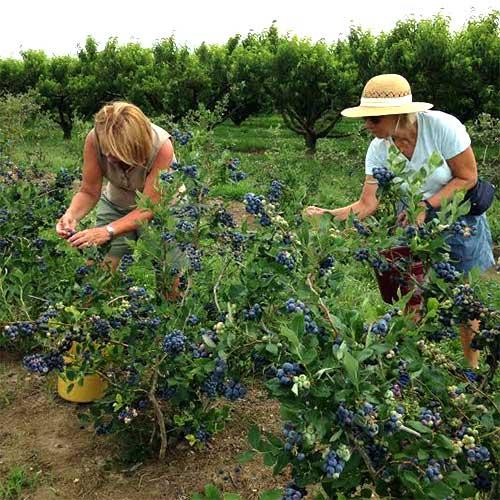 Godfrey S Farm Locally Grown Fresh Fruit Vegetables